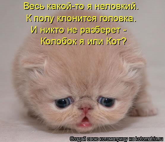 Котоматрица: Весь какой-то я неловкий. К полу клонится головка. И никто не разберет - Колобок я или Кот?