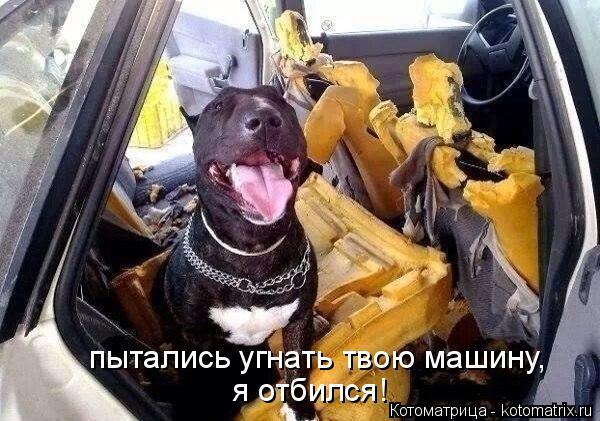 Котоматрица: пытались угнать твою машину, я отбился!