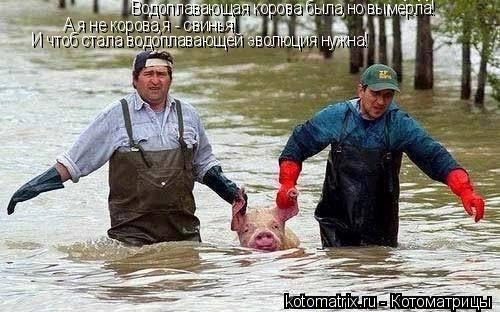 Котоматрица: Водоплавающая корова была,но вымерла! А я не корова,я - свинья! И чтоб стала водоплавающей эволюция нужна!