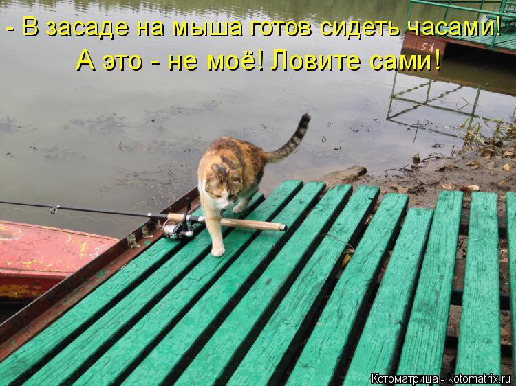 Котоматрица: - В засаде на мыша готов сидеть часами! А это - не моё! Ловите сами!