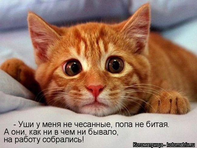 Котоматрица: - Уши у меня не чесанные, попа не битая.  А они, как ни в чем ни бывало,  на работу собрались!