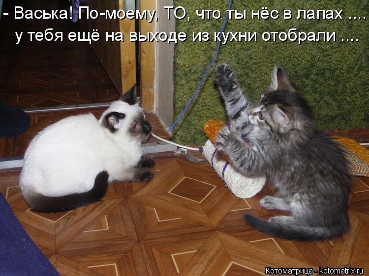 Котоматрица: - Васька! По-моему, ТО, что ты нёс в лапах .... у тебя ещё на выходе из кухни отобрали ....