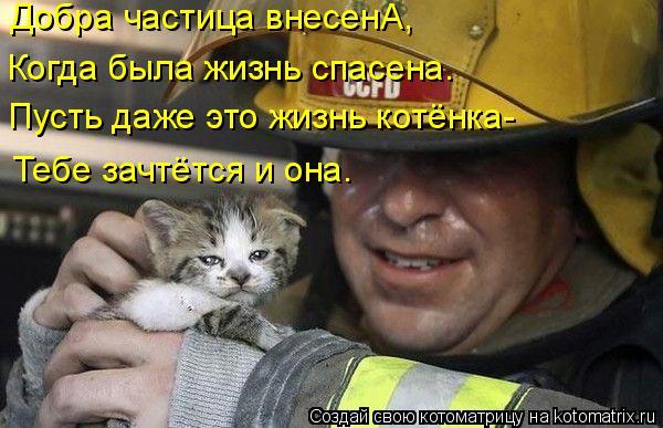 Котоматрица: Добра частица внесенА, Пусть даже это жизнь котёнка- Тебе зачтётся и она. Когда была жизнь спасена.