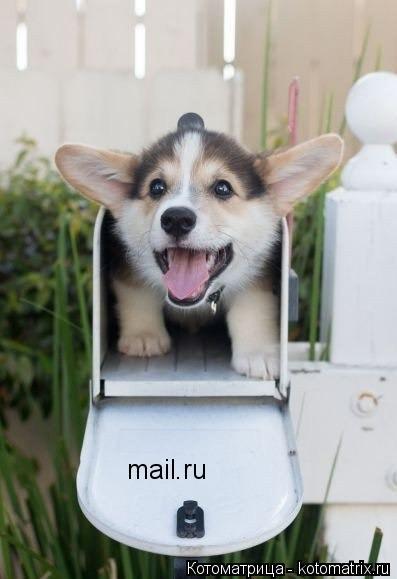 Котоматрица: mail.ru