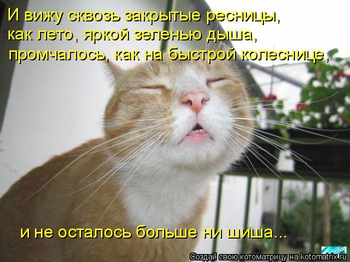 Котоматрица: И вижу сквозь закрытые ресницы,  как лето, яркой зеленью дыша,  промчалось, как на быстрой колеснице,  и не осталось больше ни шиша...