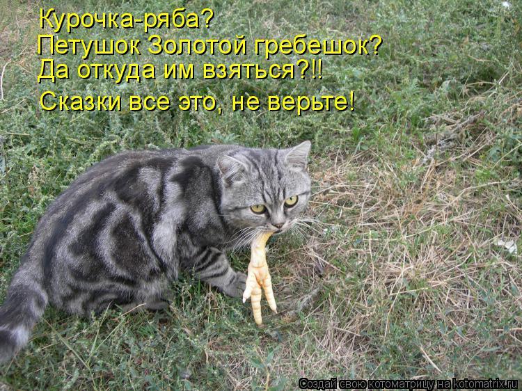 Котоматрица: Курочка-ряба? Петушок Золотой гребешок? Да откуда им взяться?!! Сказки все это, не верьте!