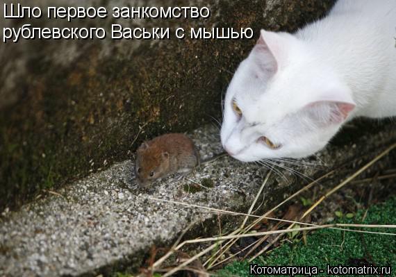 Котоматрица: Шло первое занкомство  рублевского Васьки с мышью