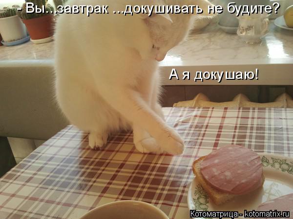Котоматрица: А я докушаю! - Вы...завтрак ...докушивать не будите?