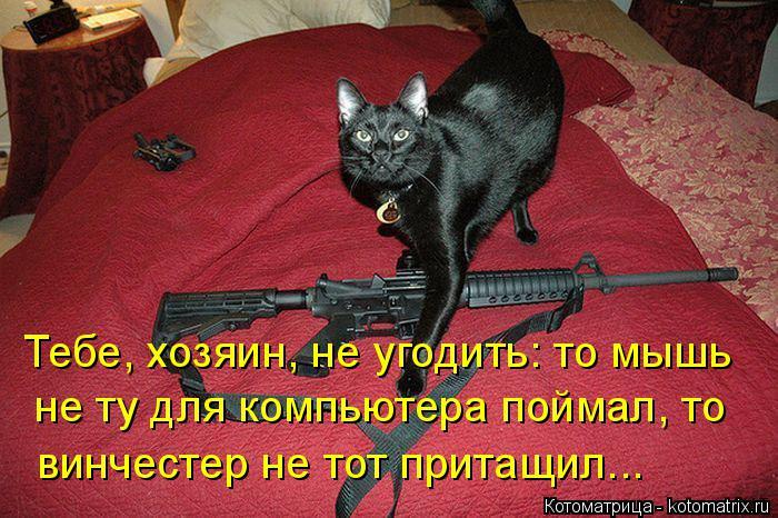 Котоматрица: Тебе, хозяин, не угодить: то мышь не ту для компьютера поймал, то винчестер не тот притащил...