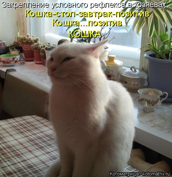 Котоматрица: Кошка-стол-завтрак-позитив Кошка...позитив КОШКА Закрепление условного рефлекса в хозяевах: