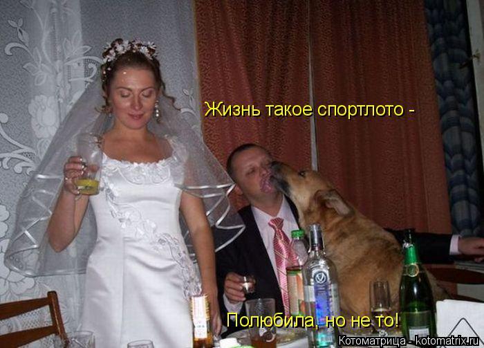 Котоматрица: Жизнь такое спортлото -  Полюбила, но не то!