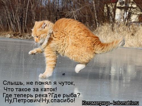 Котоматрица: Слышь, не понял я чуток, Что такое за каток! Где теперь река?Где рыба? Ну,Петрович!Ну,спасибо!