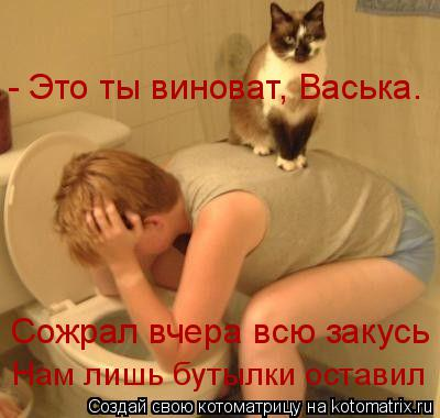 Котоматрица: - Это ты виноват, Васька. Сожрал вчера всю закусь Нам лишь бутылки оставил