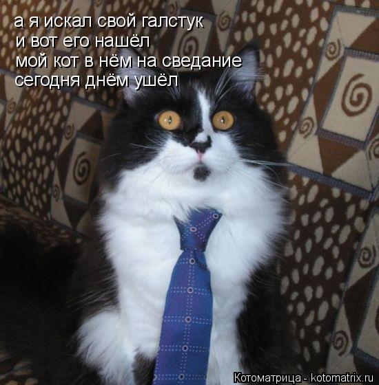 Котоматрица: а я искал свой галстук и вот его нашёл мой кот в нём на сведание сегодня днём ушёл