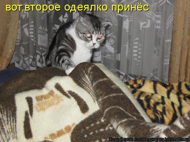Котоматрица: вот,второе одеялко принёс
