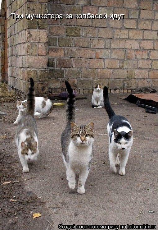 Котоматрица: Три мушкетера за колбасой идут  Три мушкетера за колбасой идут