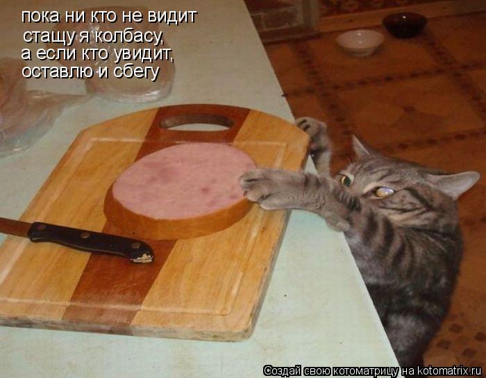 Котоматрица: пока ни кто не видит стащу я колбасу, а если кто увидит, оставлю и сбегу