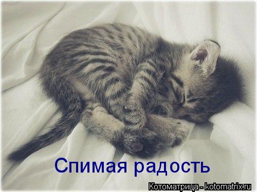 Котоматрица: Спимая радость