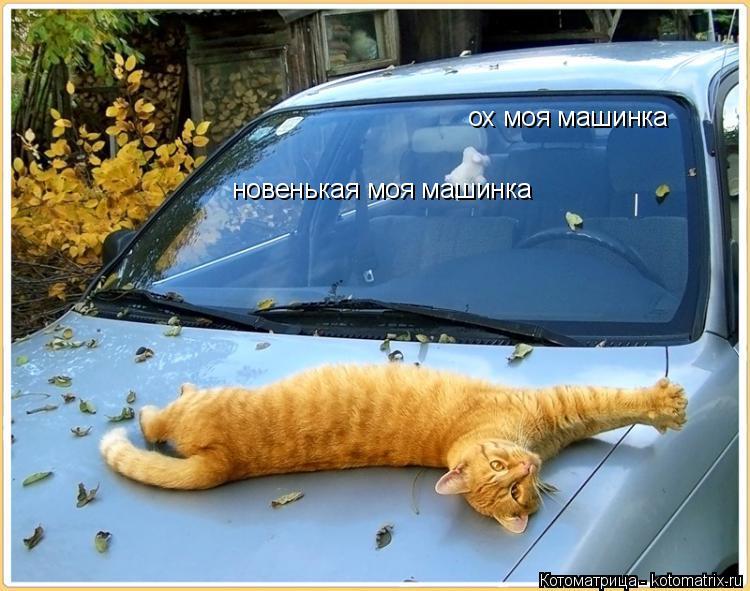 Котоматрица: ох моя машинка новенькая моя машинка