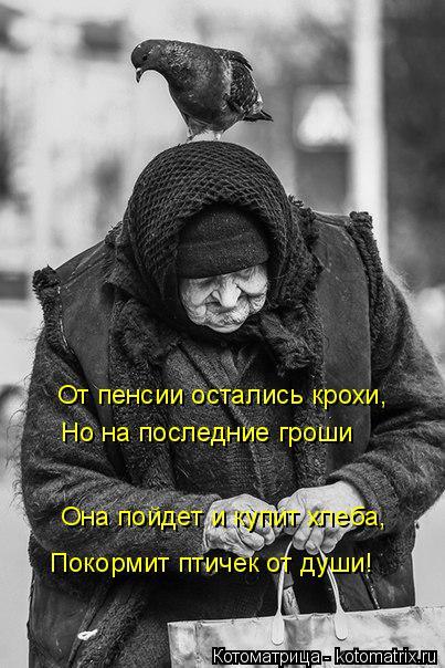 Котоматрица: От пенсии остались крохи, Но на последние гроши Она пойдет и купит хлеба, Покормит птичек от души!