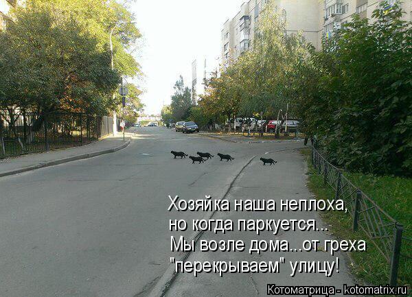 """Котоматрица: Хозяйка наша неплоха, но когда паркуется... Мы возле дома...от греха """"перекрываем"""" улицу!"""