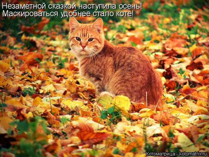 Котоматрица: Незаметной сказкой наступила осень! Маскироваться удобнее стало коте!