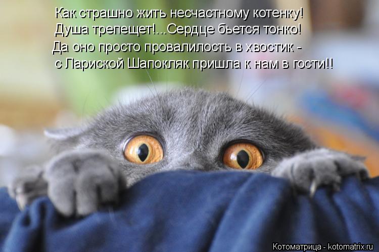 Котоматрица: Как страшно жить несчастному котенку! Душа трепещет!...Сердце бьется тонко! Да оно просто провалилость в хвостик - с Лариской Шапокляк пришл