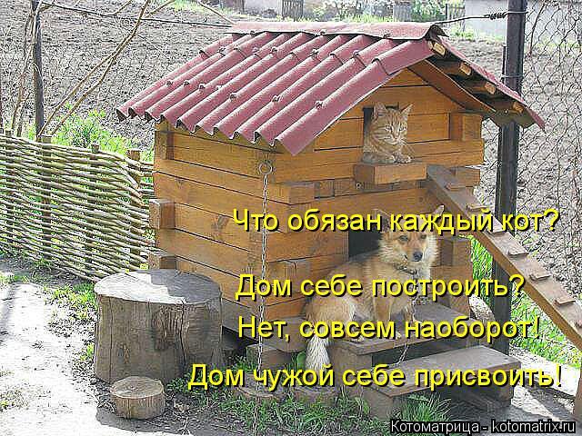 Котоматрица: Что обязан каждый кот? Дом себе построить? Нет, совсем наоборот! Дом чужой себе присвоить!