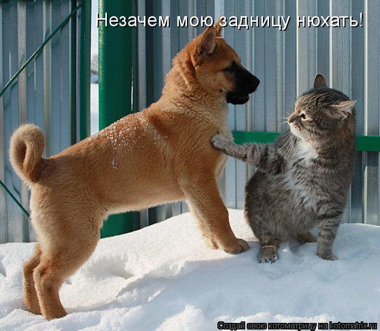 Котоматрица: Незачем мою задницу нюхать!