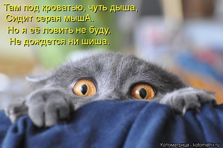 Котоматрица: Там под кроватью, чуть дыша, Сидит серая мышА. Но я её ловить не буду, Не дождется ни шиша.
