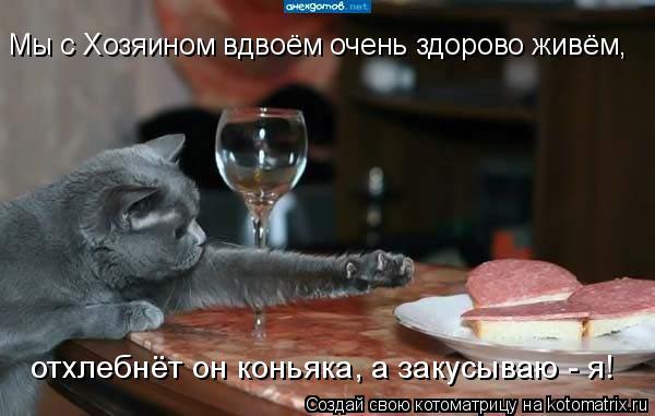 Котоматрица: Мы с Хозяином вдвоём очень здорово живём, отхлебнёт он коньяка, а закусываю - я!