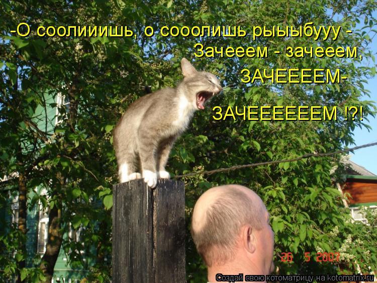 Котоматрица: -О соолииишь, о сооолишь рыыыбууу -  Зачееем - зачееем,  ЗАЧЕЕЕЕМ- ЗАЧЕЕЕЕЕЕМ !?!