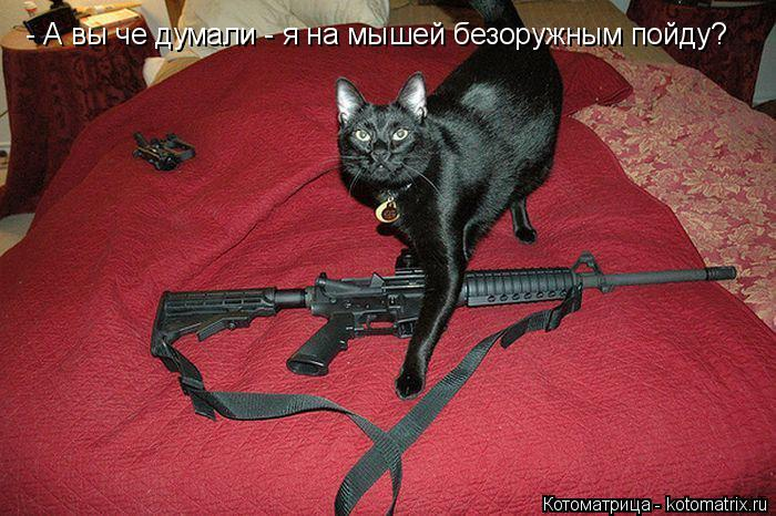 Котоматрица: - А вы че думали - я на мышей безоружным пойду?