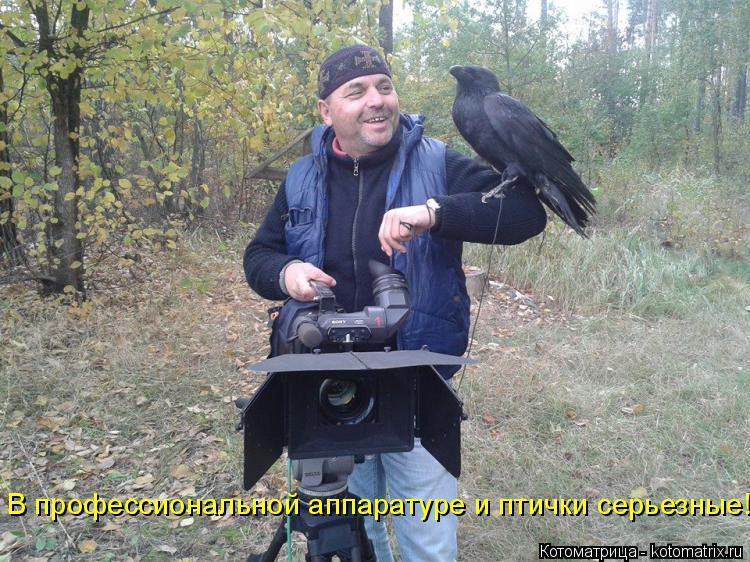 Котоматрица: В профессиональной аппаратуре и птички серьезные!