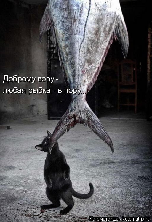 Котоматрица: Доброму вору -  любая рыбка - в пору...