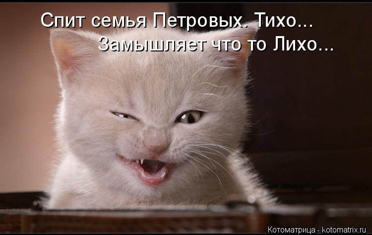 Котоматрица: Спит семья Петровых. Тихо... Замышляет что то Лихо...