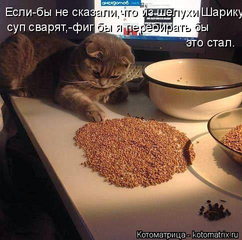 Котоматрица: Если-бы не сказали,что из шелухи Шарику  суп сварят,-фиг бы я перебирать бы  это стал.