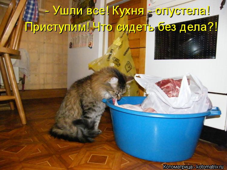 Котоматрица: - Ушли все! Кухня - опустела! Приступим! Что сидеть без дела?!
