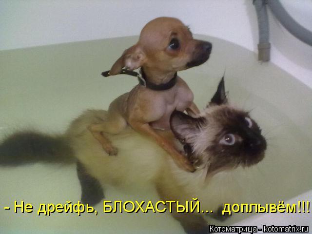 Котоматрица: - Не дрейфь, БЛОХАСТЫЙ...  доплывём!!!