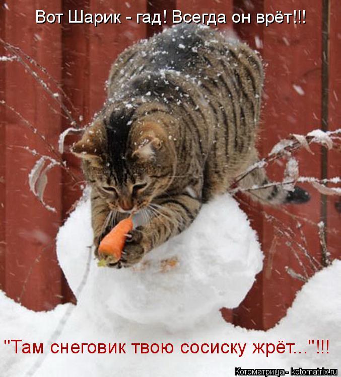 """Котоматрица: Вот Шарик - гад! Всегда он врёт!!! """"Там снеговик твою сосиску жрёт...""""!!!"""