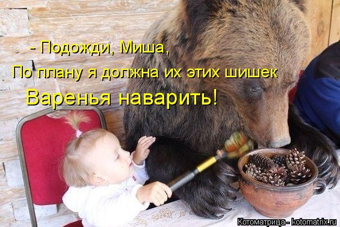 Котоматрица: - Подожди, Миша, По плану я должна их этих шишек Варенья наварить!