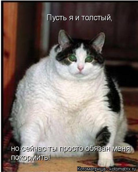 Котоматрица: Пусть я и толстый,  но сейчас ты просто обязан меня покормить!