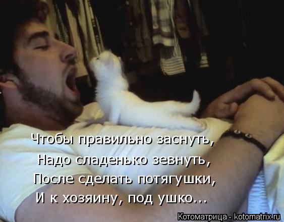 Котоматрица: Чтобы правильно заснуть, Надо сладенько зевнуть, После сделать потягушки, И к хозяину, под ушко...