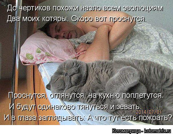 Котоматрица: До чертиков похожи назло всем эволюциям Два моих котяры. Скоро вот проснутся. Проснутся, оглянутся, на кухню поплетутся. И будут одинаково т
