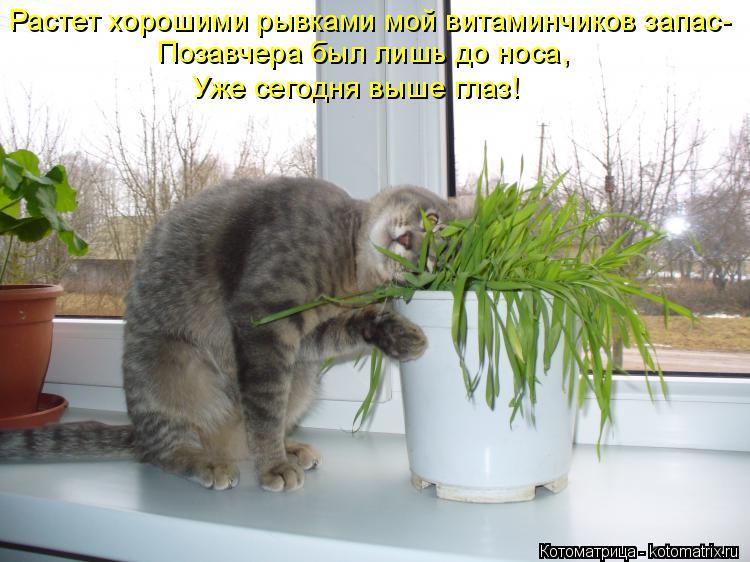 Котоматрица: Растет хорошими рывками мой витаминчиков запас- Позавчера был лишь до носа,  Уже сегодня выше глаз!