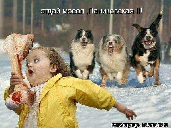 Котоматрица: отдай мосол ,Паниковская !!!
