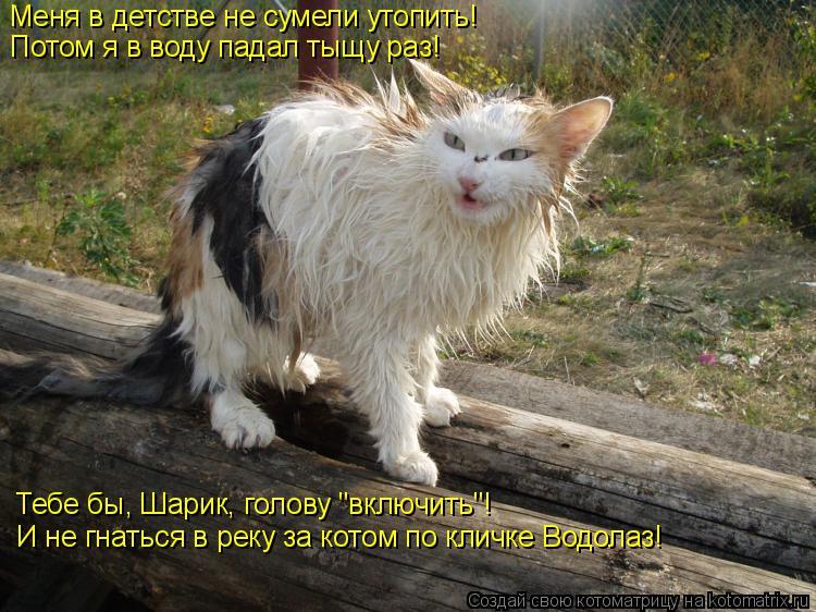 """Котоматрица: Меня в детстве не сумели утопить! Потом я в воду падал тыщу раз! Тебе бы, Шарик, голову """"включить""""! И не гнаться в реку за котом по кличке Водол"""