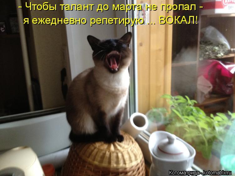 Котоматрица: - Чтобы талант до марта не пропал - я ежедневно репетирую ... ВОКАЛ!