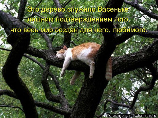 Котоматрица: Это дерево служило Васеньке лишним подтверждением того, что весь мир создан для него, любимого.