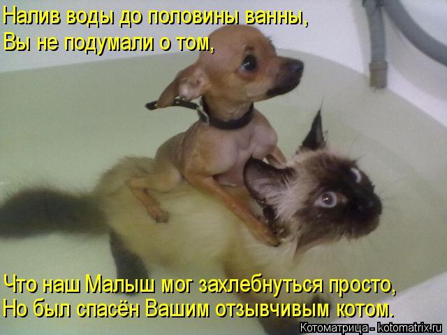 Котоматрица: Налив воды до половины ванны, Вы не подумали о том, Что наш Малыш мог захлебнуться просто, Но был спасён Вашим отзывчивым котом.